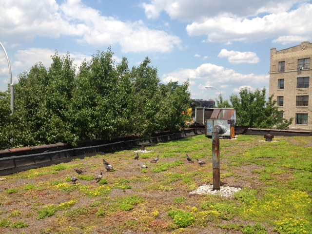 New green roof cools and cleans