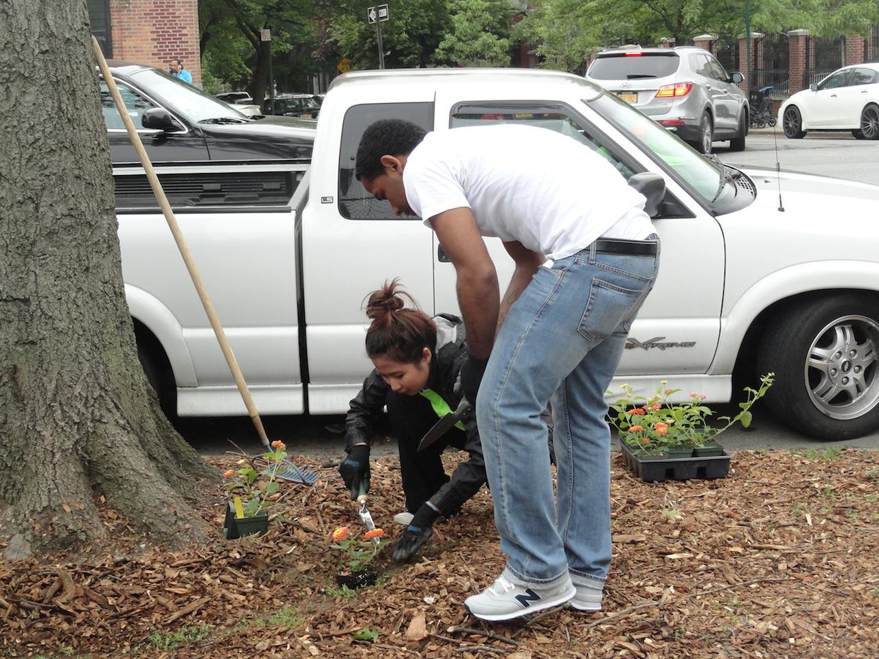 Tree census kicks off in Hunts Point